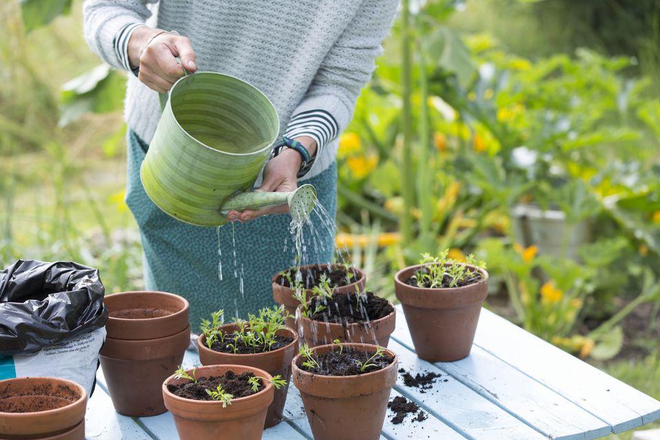 Woman watering plants in pots