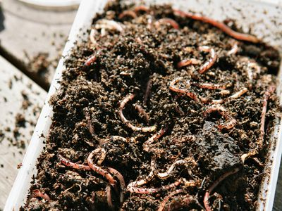 Make Your Own Worm Bin From 5-Gallon Buckets