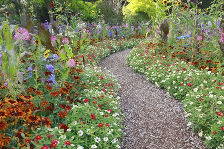 Low Maintenance Perennial Flowers