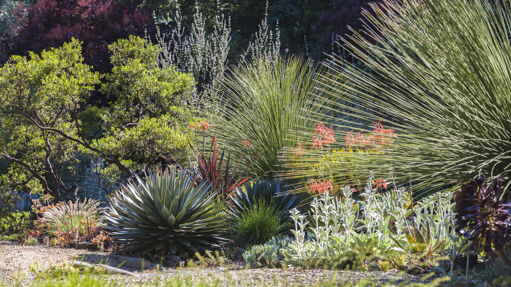 15 Best Plants For Drought Tolerant Gardens