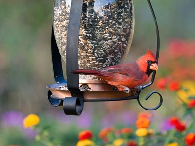 Benefits Of Attracting Birds To Your Backyard