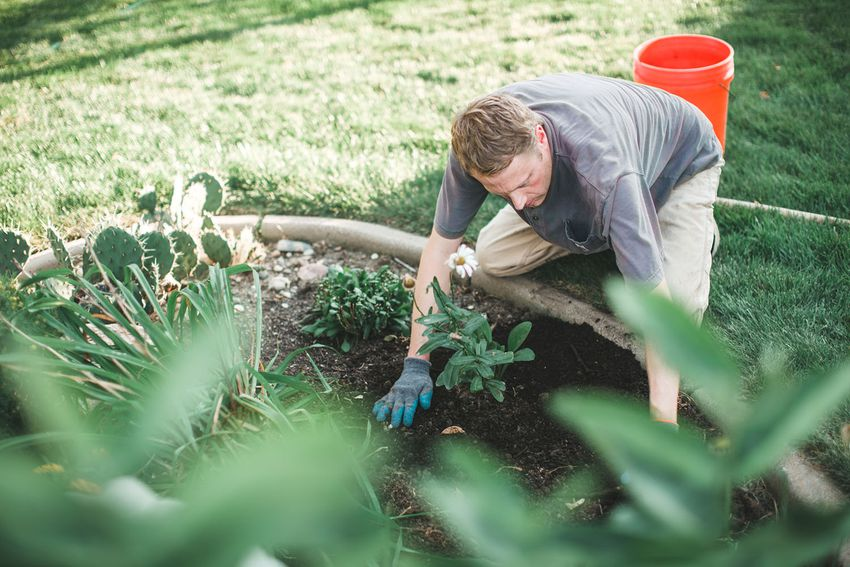 Man plants a plant in a garden on a warm fall day.