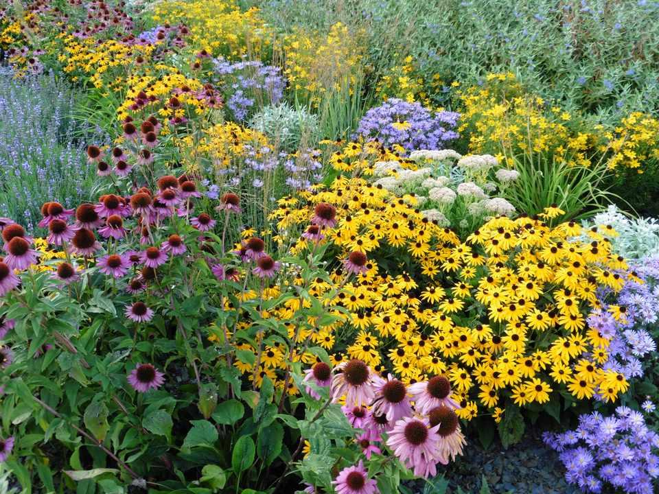 Perennial flower border