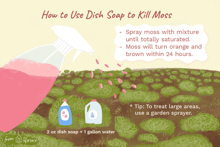 How Dish Soap Can Kill Unwanted Moss in Your Lawn