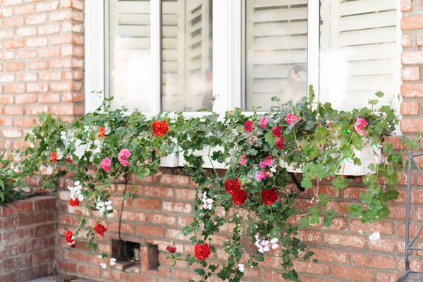 window box with florals