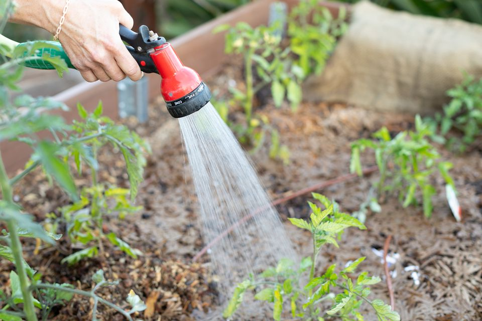 person watering a garden bed