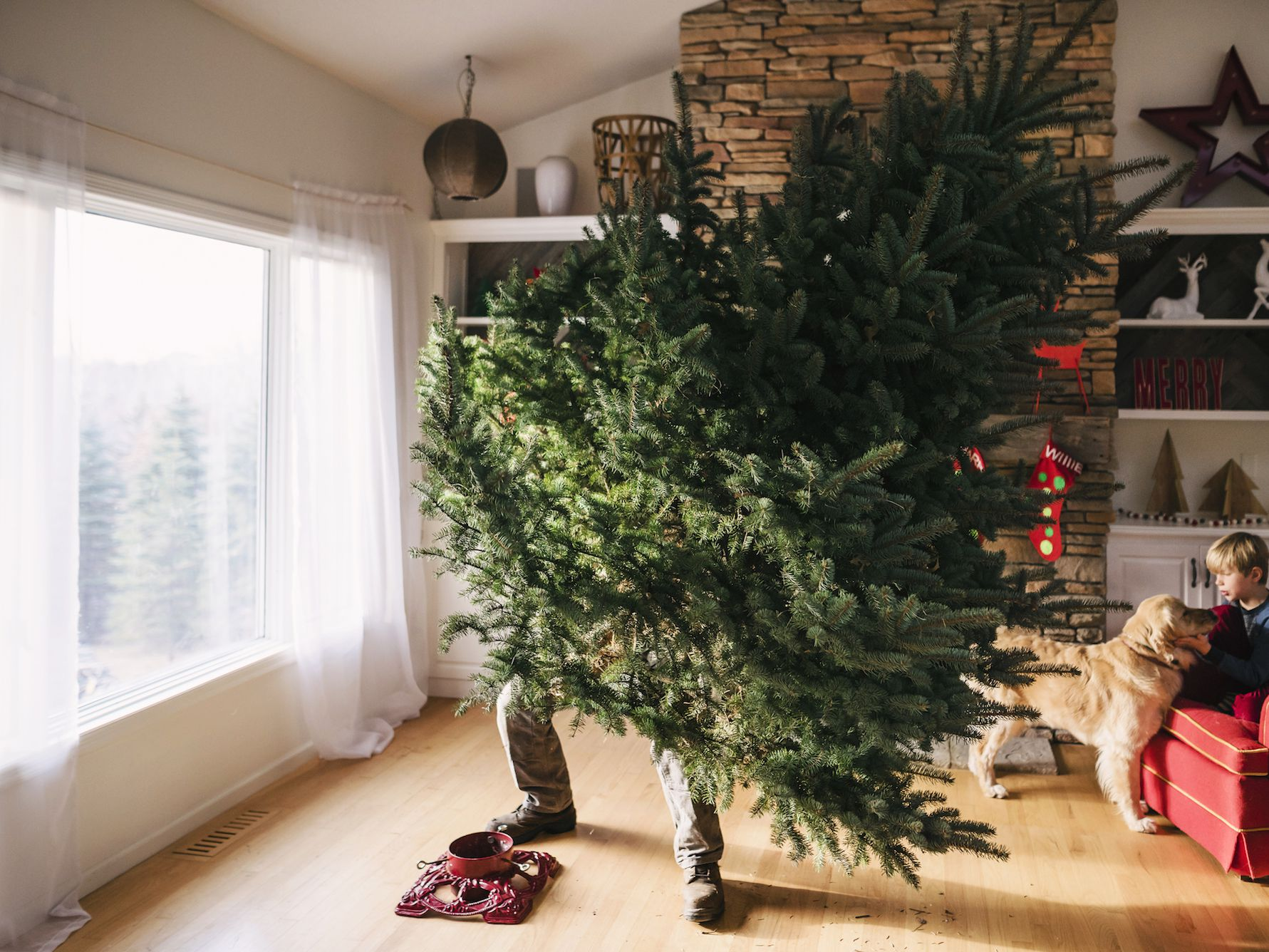 The 9 Best Christmas Tree Stands Of 2019