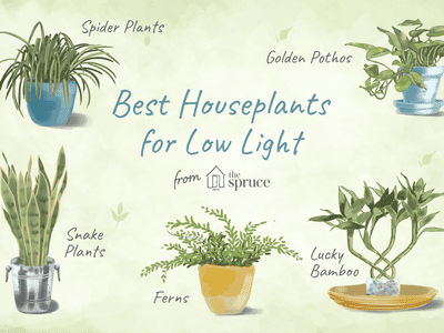 The 10 Best Plants For Your Office Or Desk