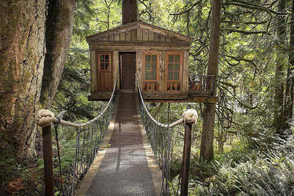 Walkway to remote tree house