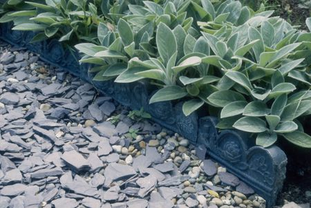 Path made of slate and pebbles with decorative tiles, and Lamb's ears (Stachys byzantina