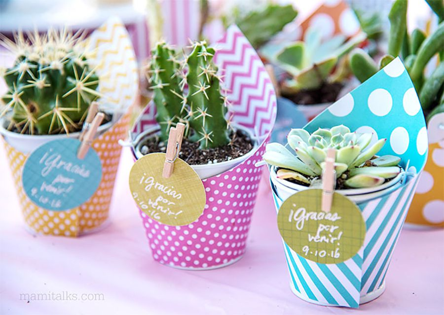 Three succulents wrapped in brightly colored paper