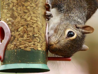 The 8 Best Squirrel-Proof Bird Feeders of 2019