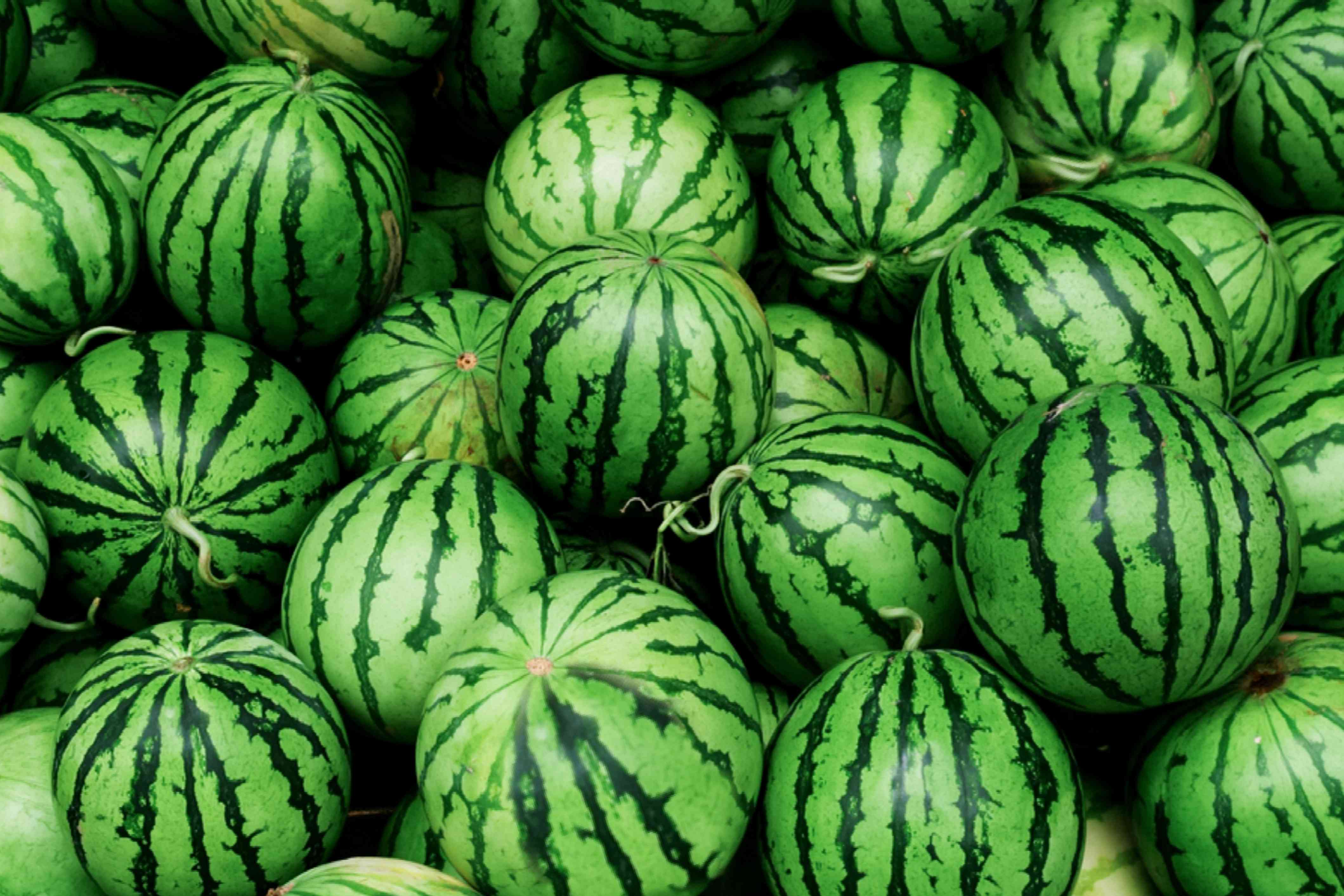 A pile of whole watermelon fruit