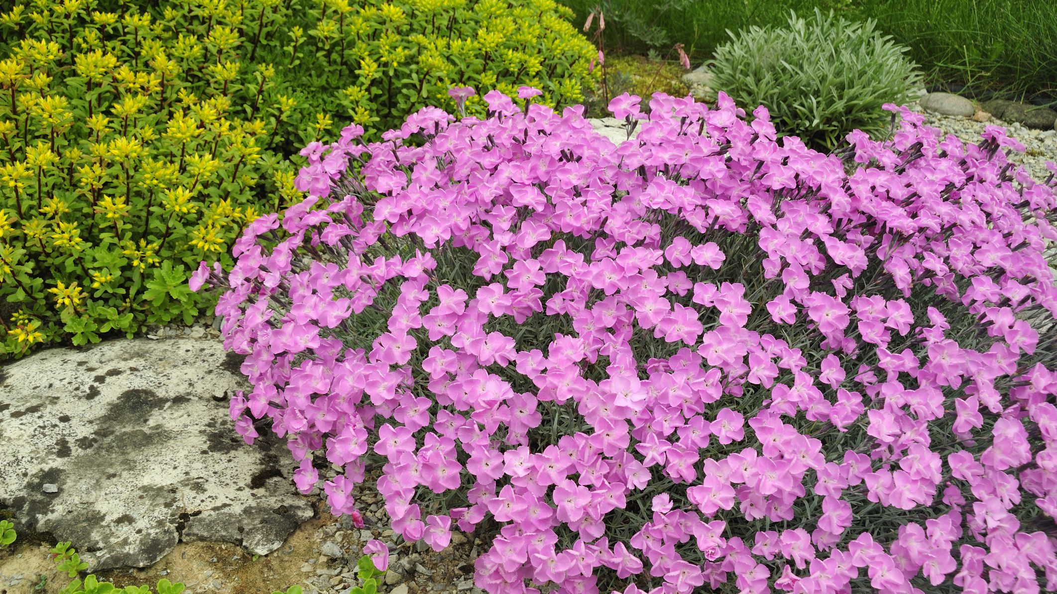 33 Best Plants For A Rock Garden