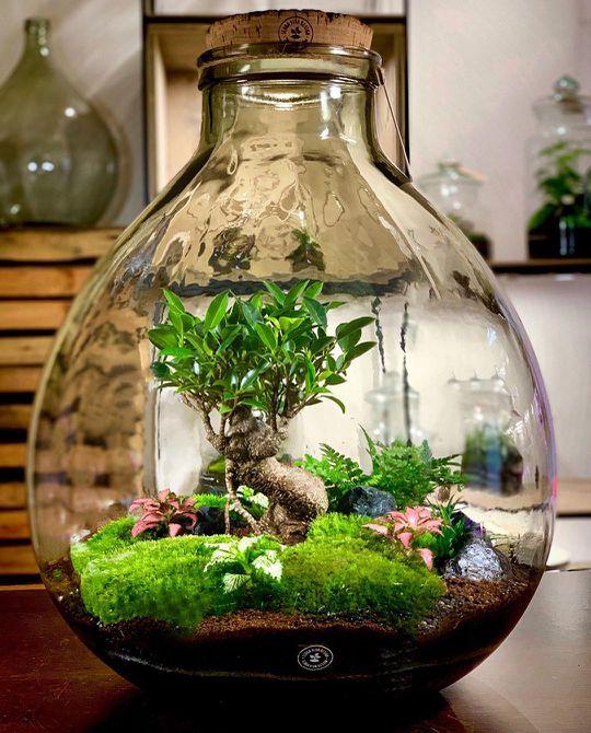 Terrario en un frasco de vidrio