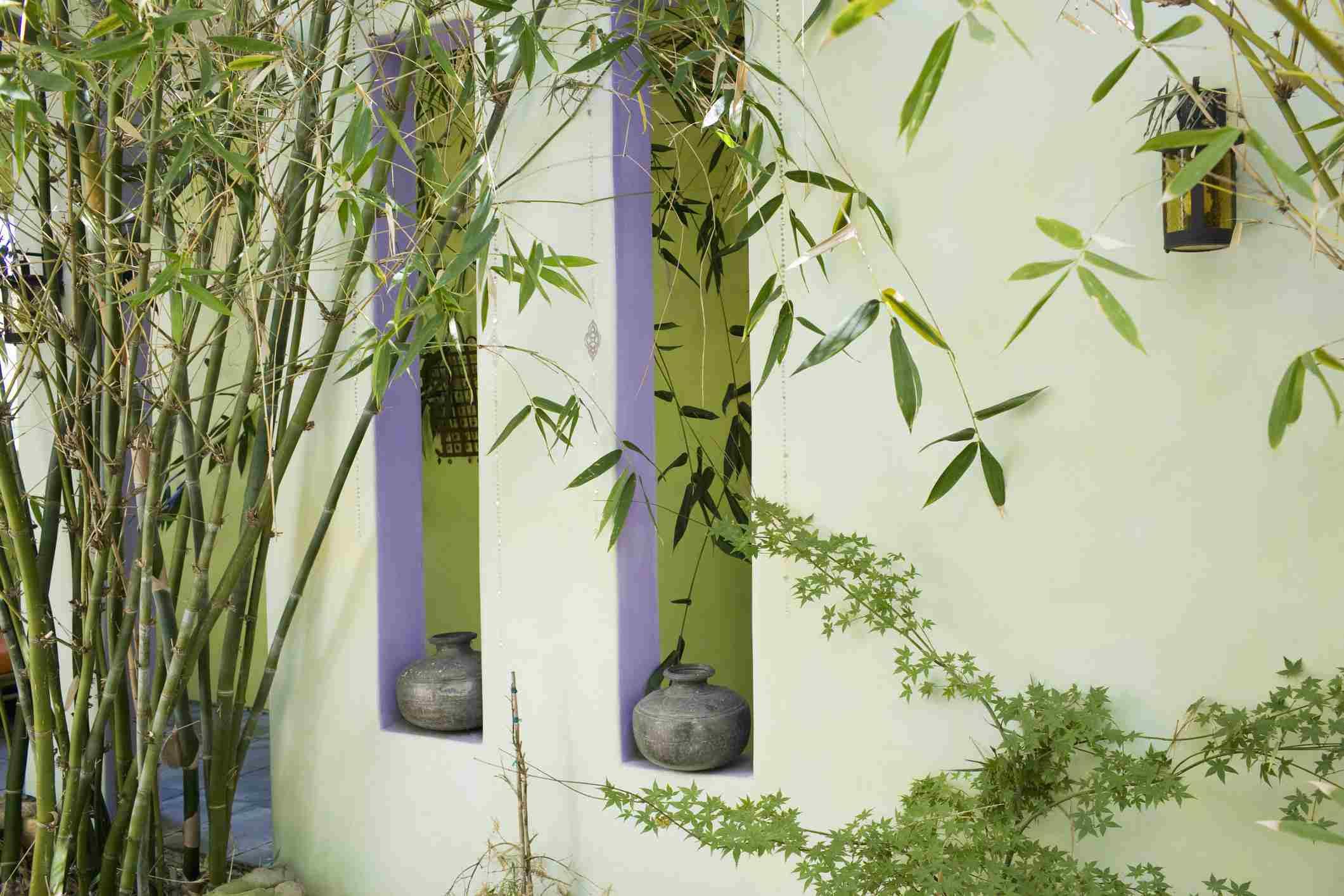 Bamboo Patio Plant
