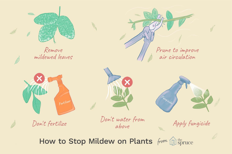 how to stop mildew on plants