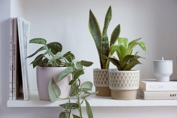 houseplants arranged on a shelf