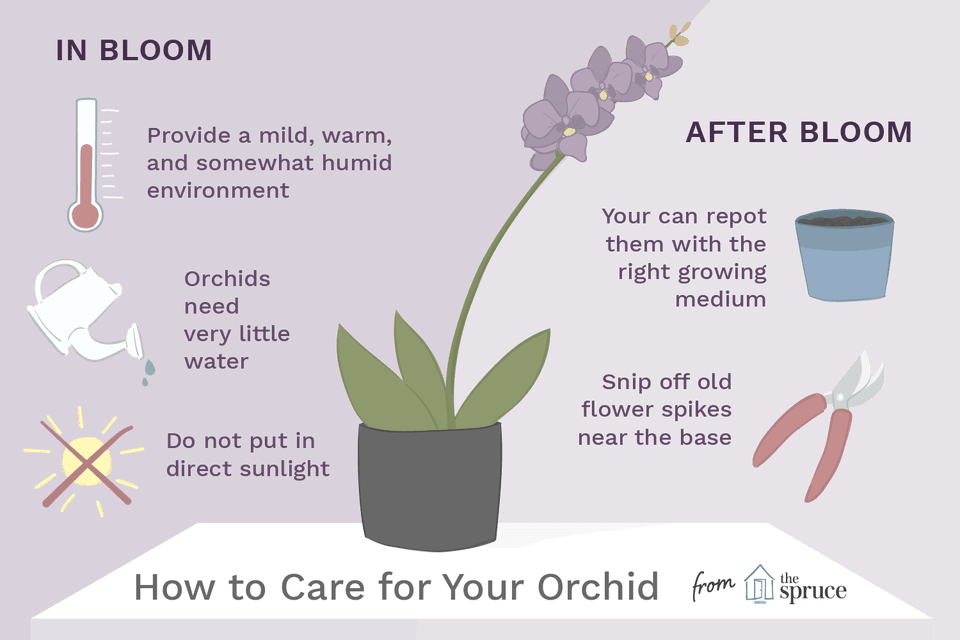 Illustration of how to care for an orchid