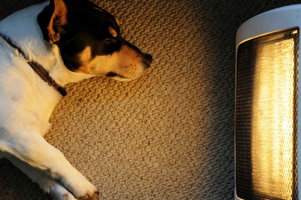 A picture of a dog sitting in front of a heater