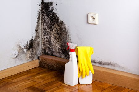 A Corner With Mold About To Be Cleaned