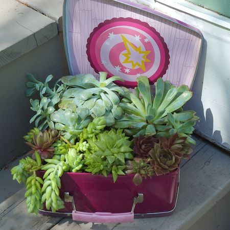 how to display succulents 30 cute examples.htm creative succulent container ideas  creative succulent container ideas