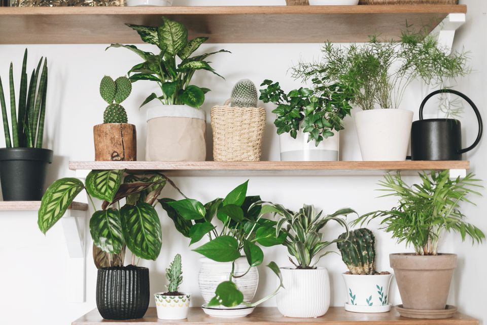 stylish plant collection on wood shelves