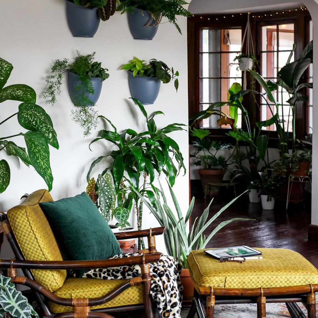 Wall plants in a living room