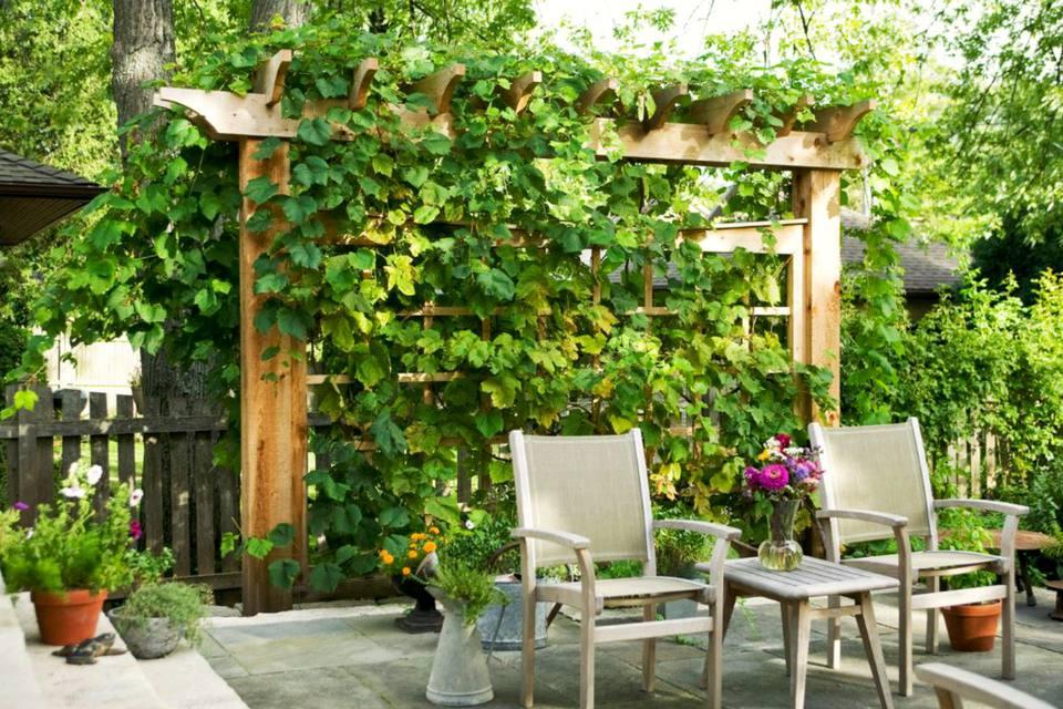 arbor with vine