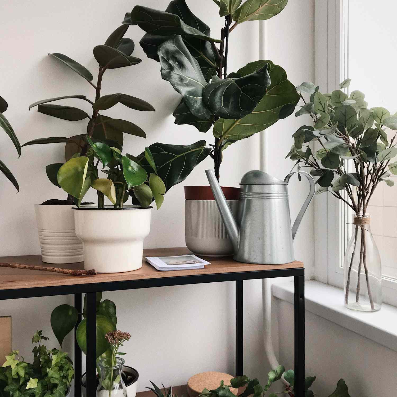 a variety of houseplants on a shelf near the window