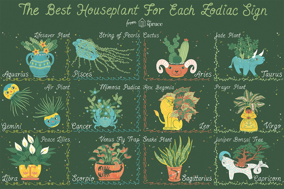 best houseplant for your zodiac sign illustration