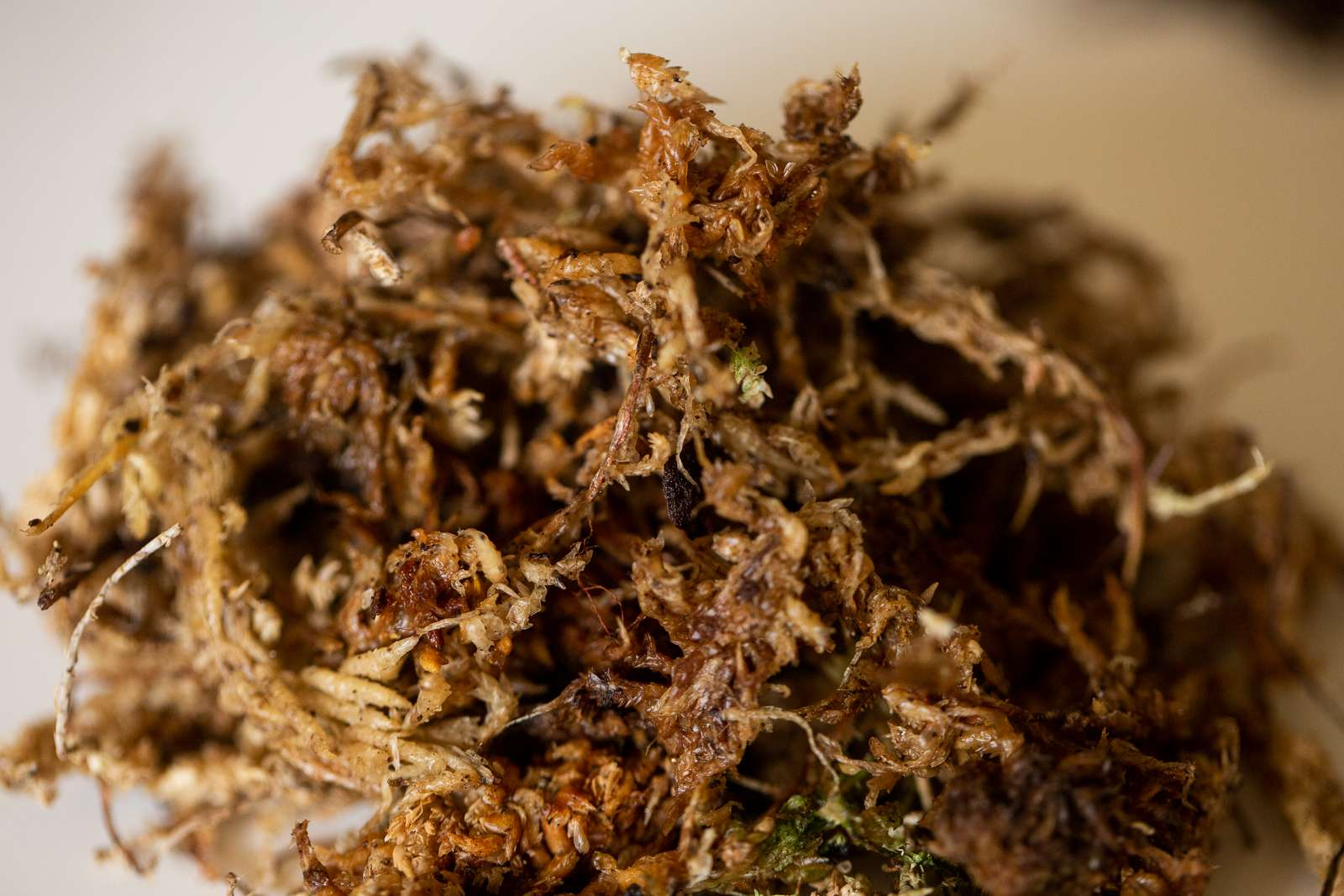 Pile of sphagnum peat moss for soilless potting mix closeup