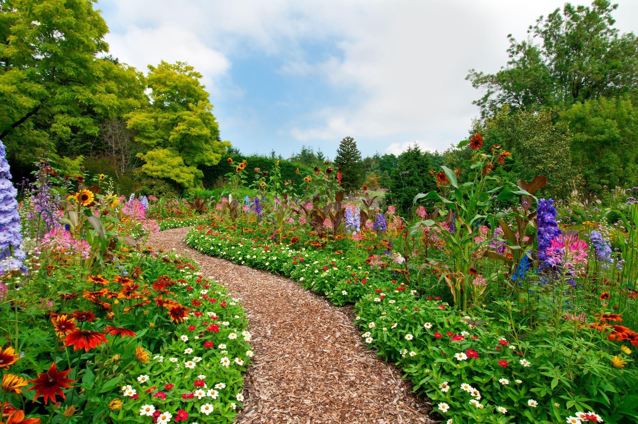 Path through a lush summer flower garden