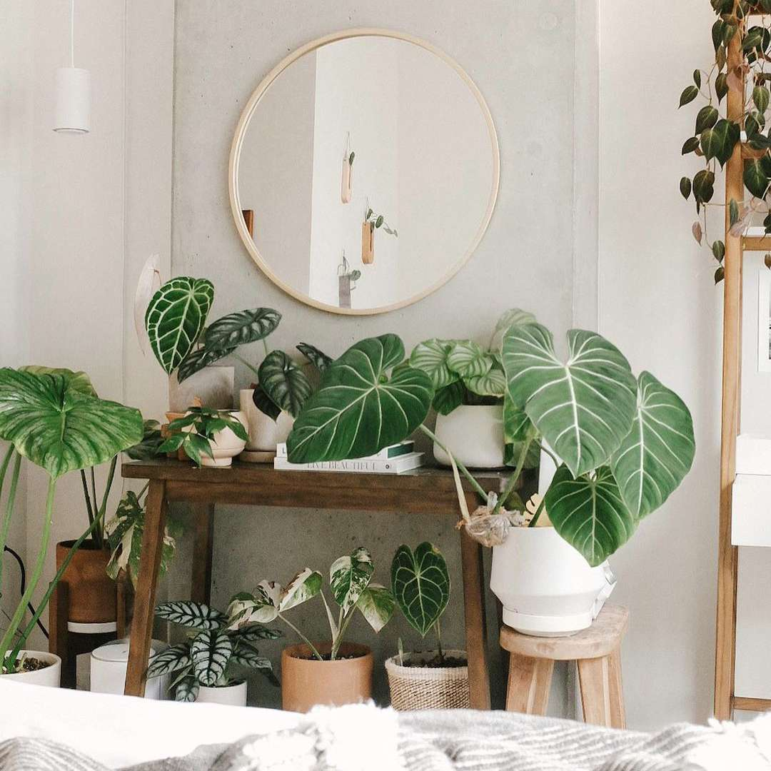 plants on console table