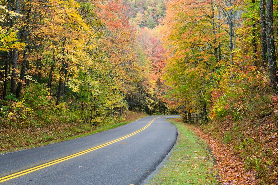 Fall foliage of the Smoky Mountains on highway 411
