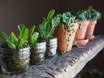 The 7 Best Houseplants For Beginners