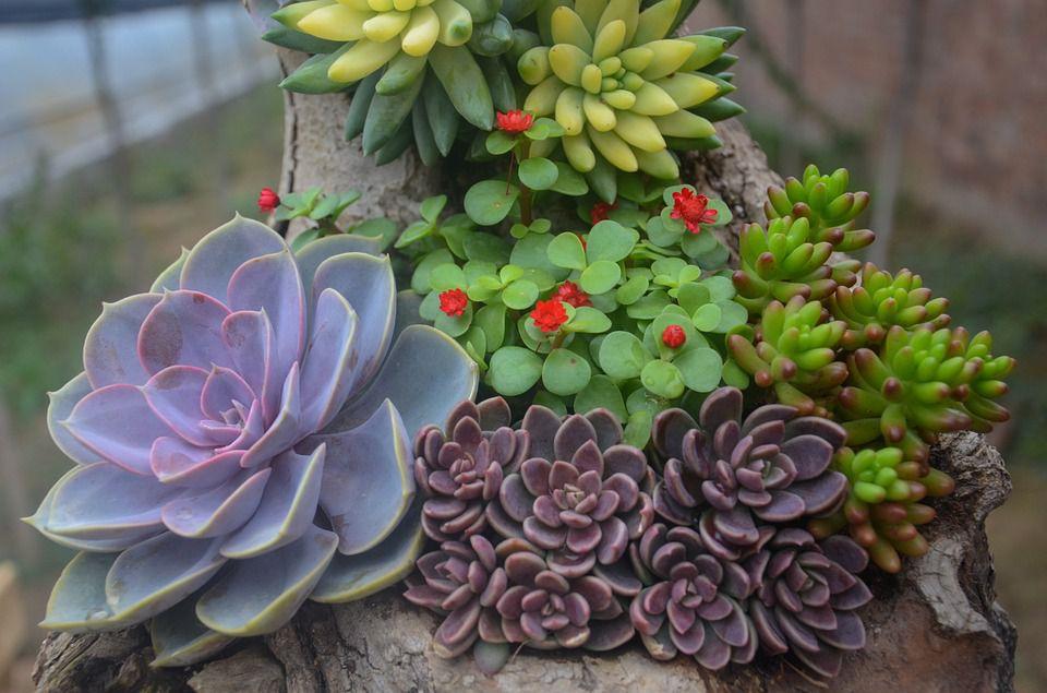 Xeriscape plants drought resistant landscape approach for Decoracion con plantas suculentas