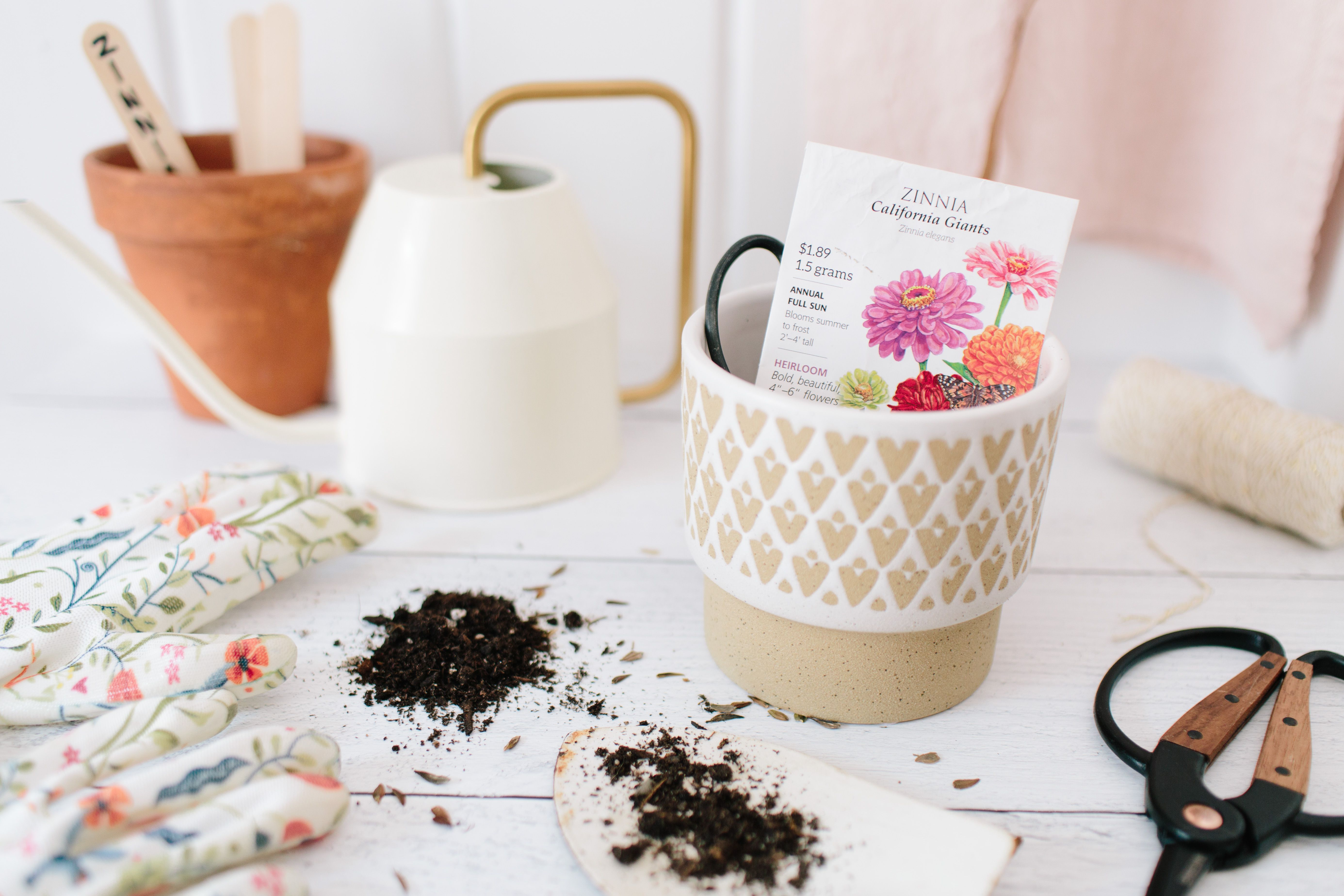 Planting and Growing Zinnia Seeds