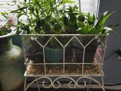 Standing terrarium with plants
