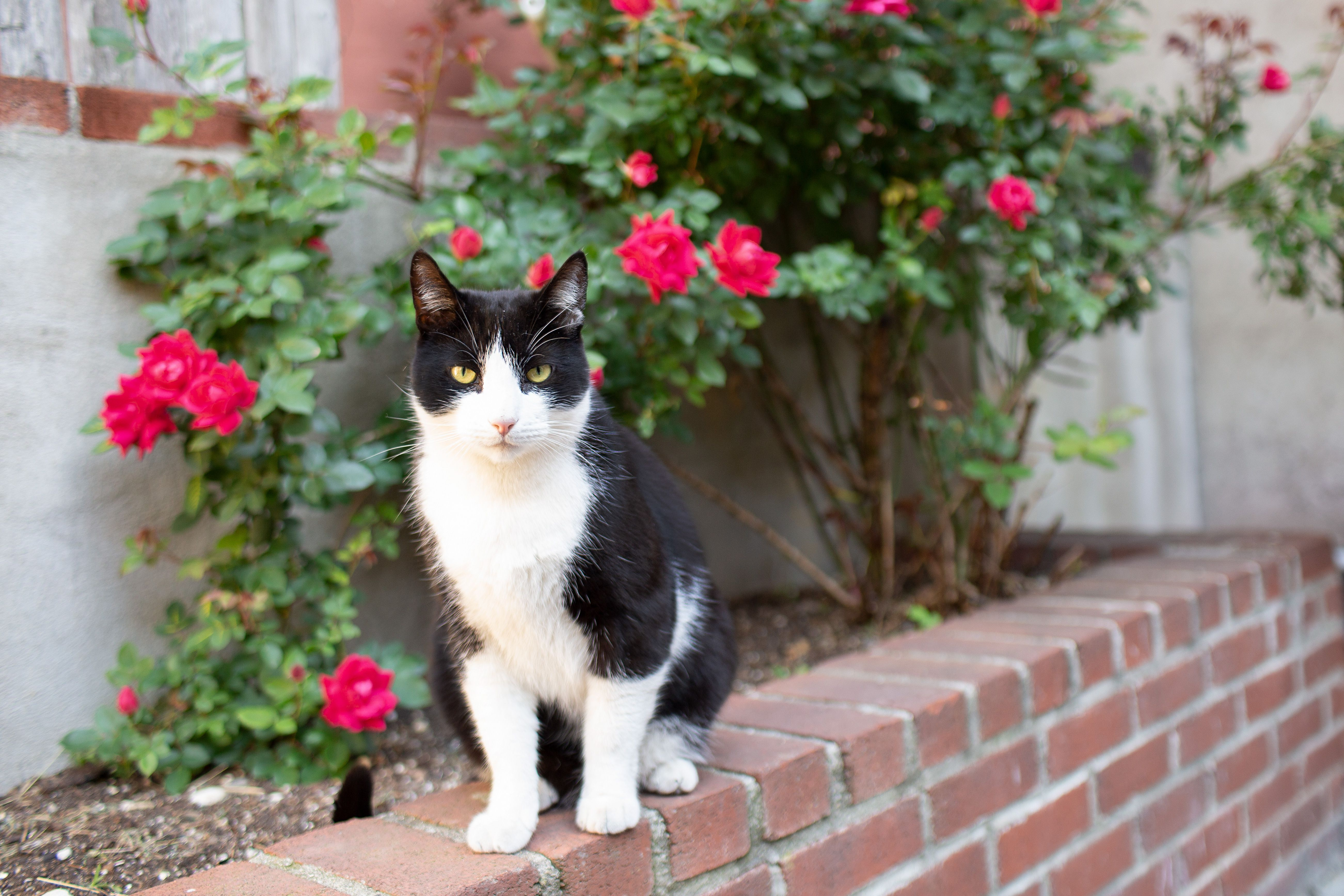 Stray Domestic cat Small indefinite amount Approximately House