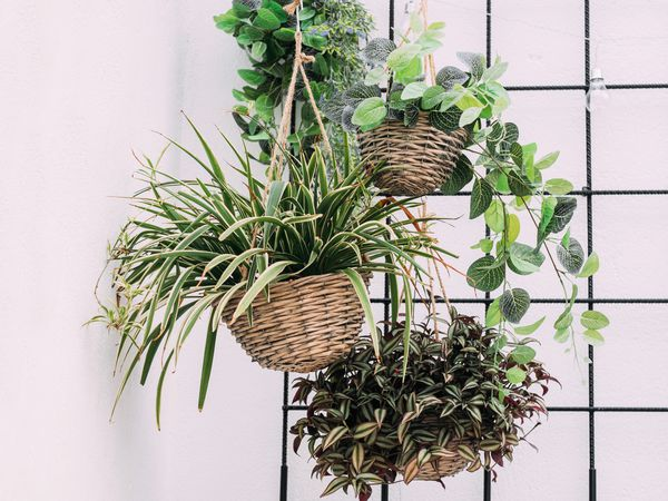 Arrangement of hanging wicker flowerpots with green house plants against a decorative background.