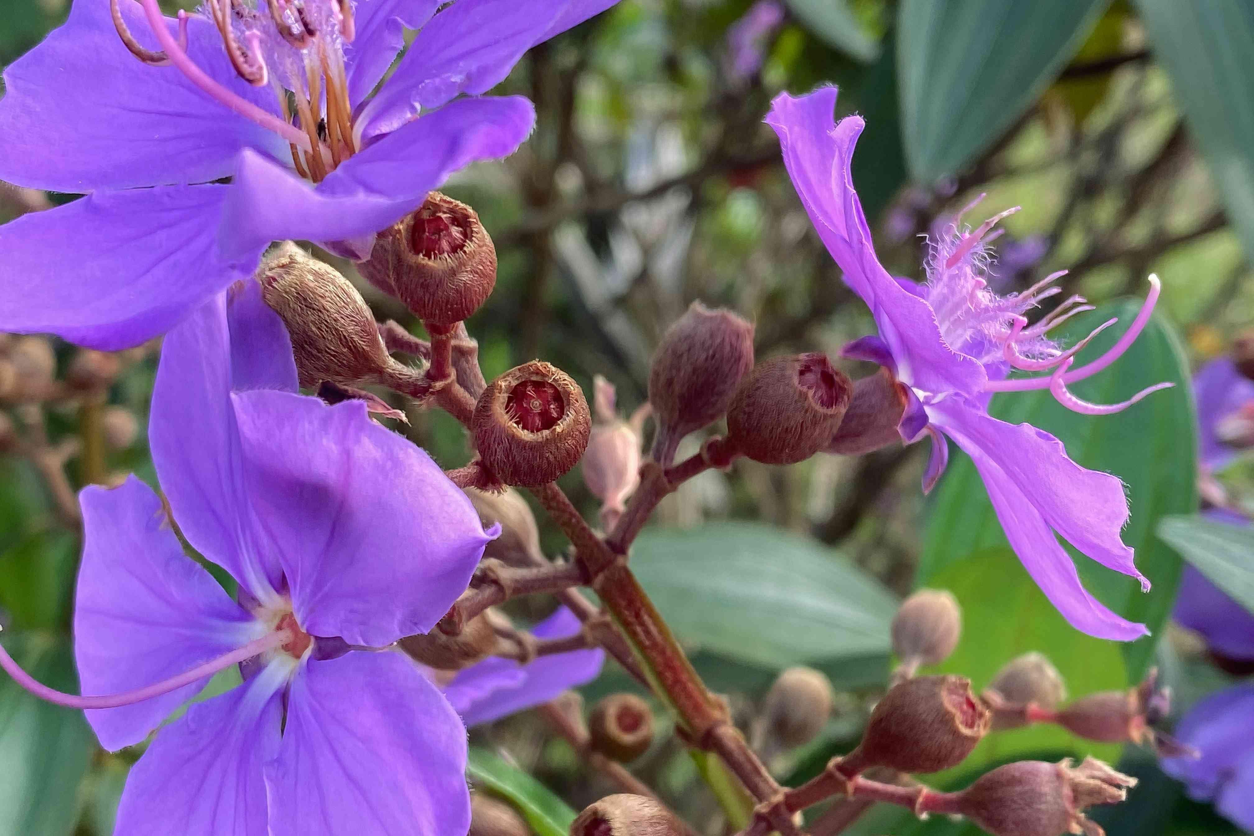 close up of a purple princess