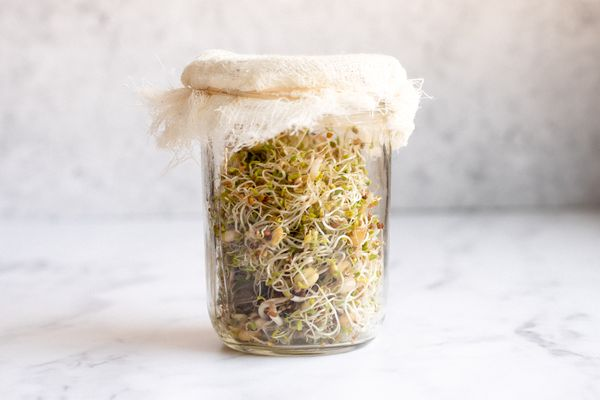 sprouts in a glass jar