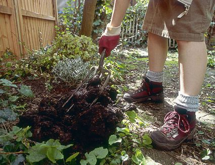 Is Wood Ash Good For Garden Soil