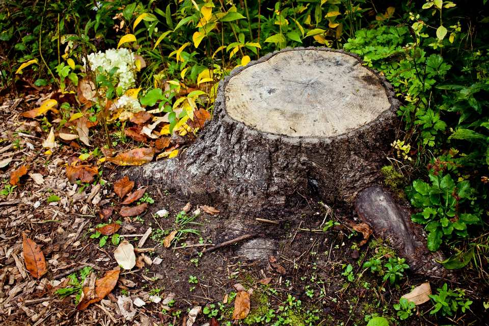 Image: tree stump.