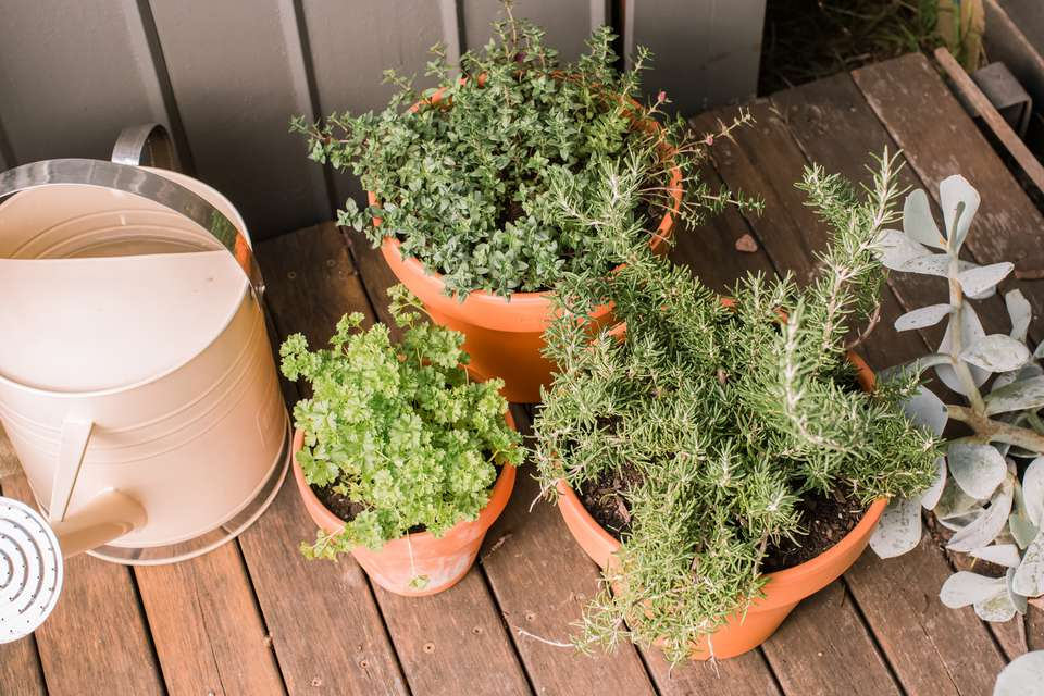 herbs in various pots