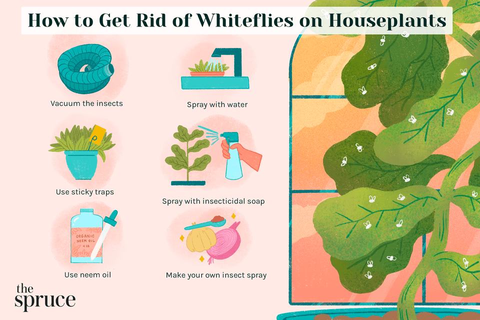 How to Get Rid of Whiteflies on Houseplants