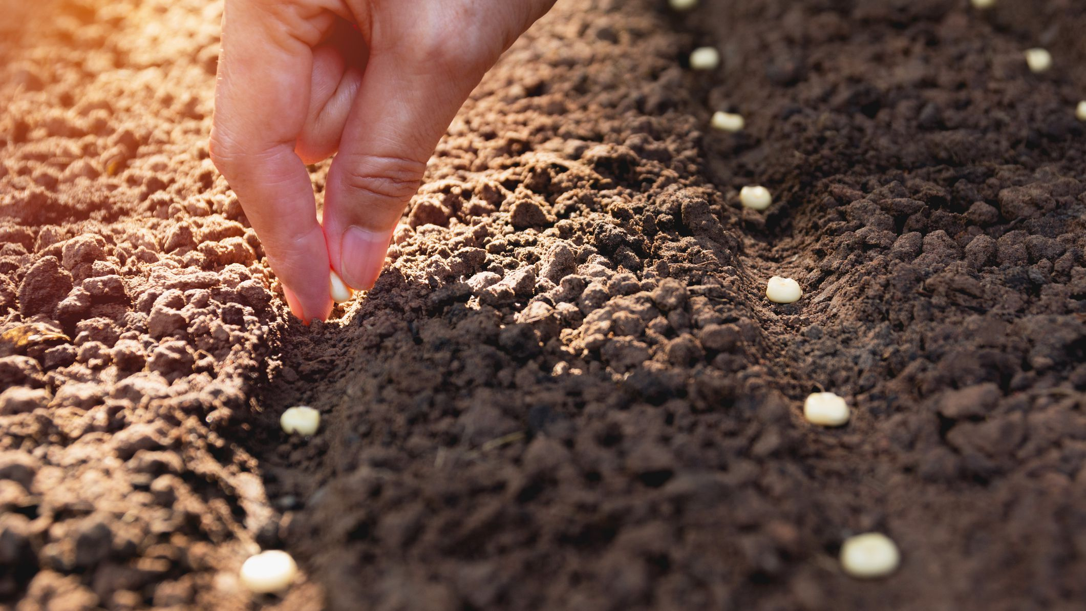 Sowing Seeds Outdoors in the Winter