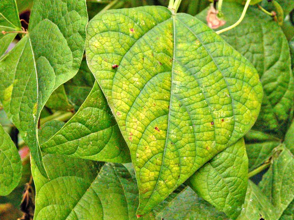 Signs of Plant Nutrient Deficiencies