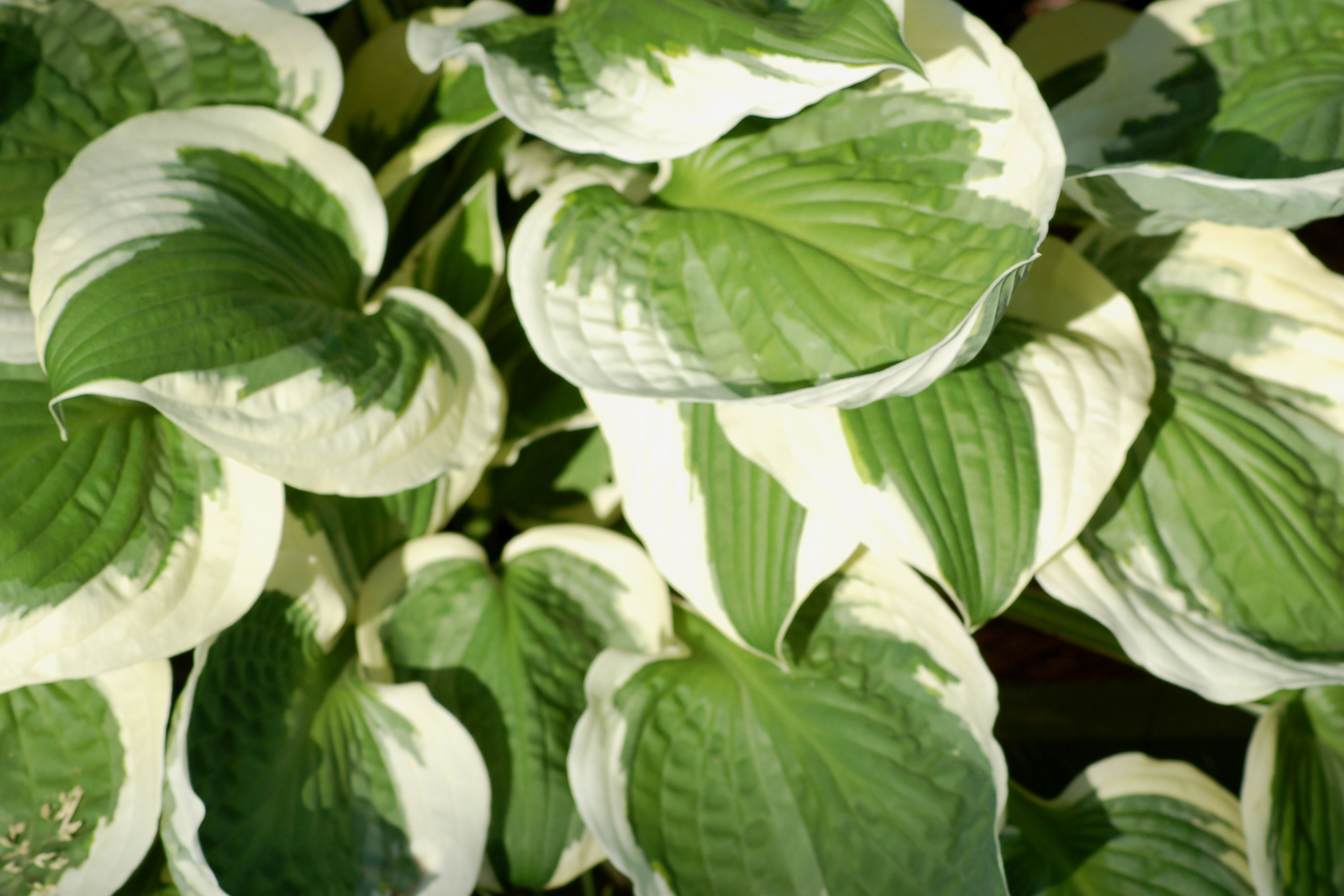 Best Plants For Dry Shade